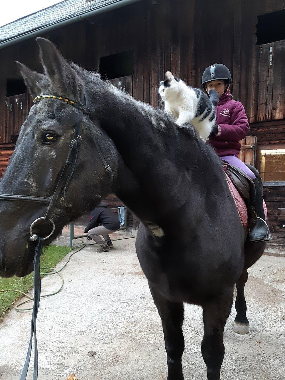 In Erinnerung an Furioso - Pferd & Freund