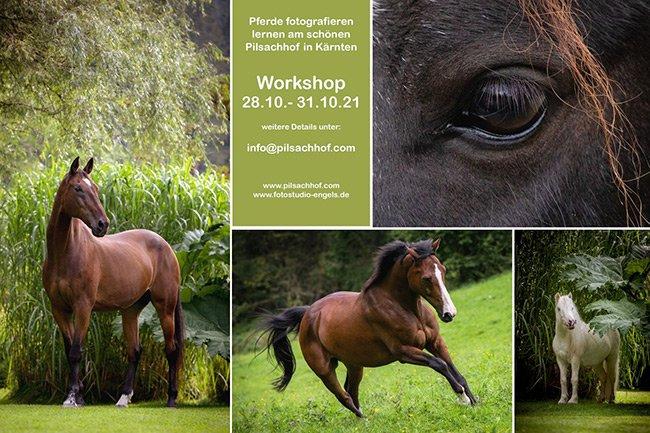 Fotoworkshop Ende Oktober am Pilsachhof