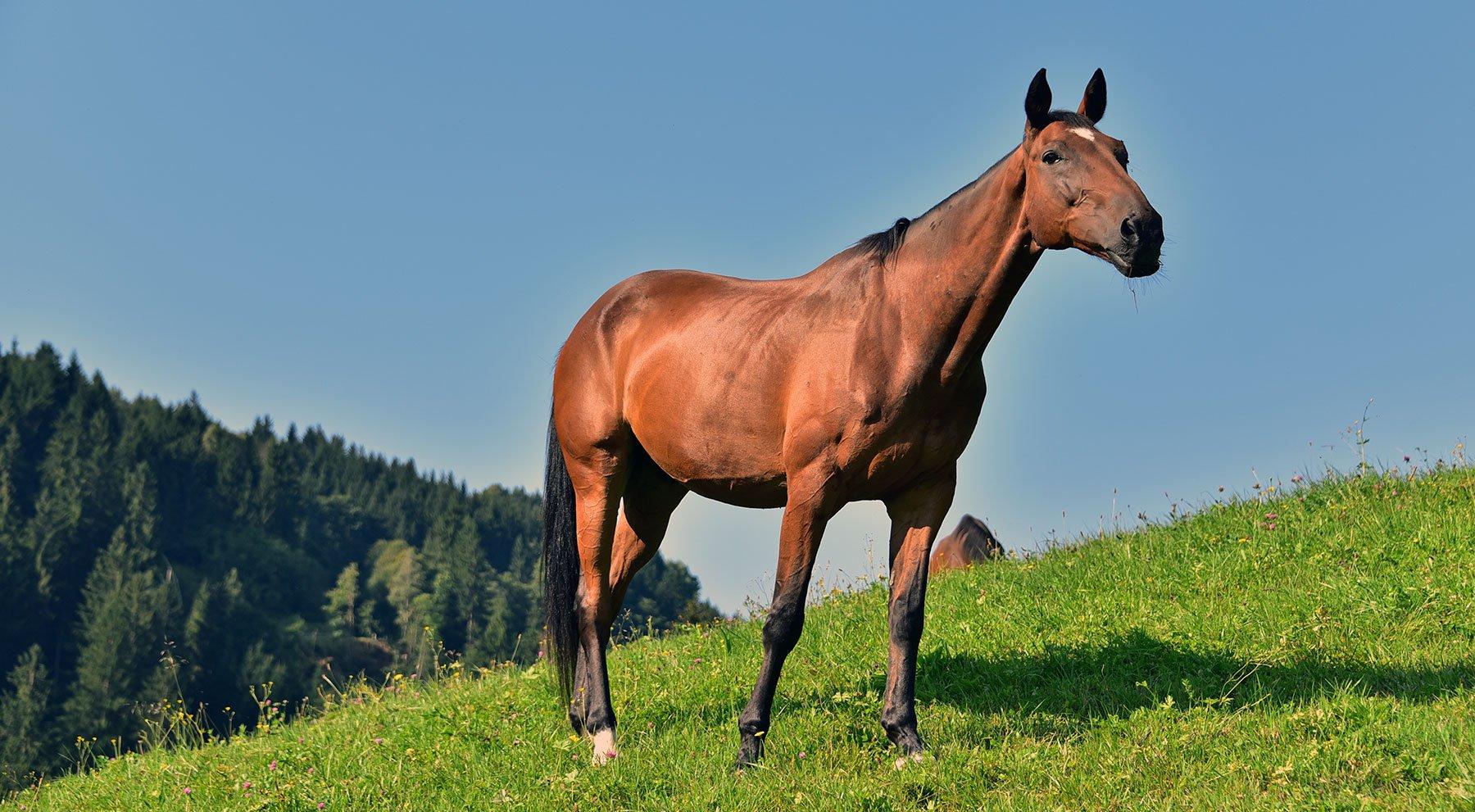 Pferd Chou Chou am Bauernhof