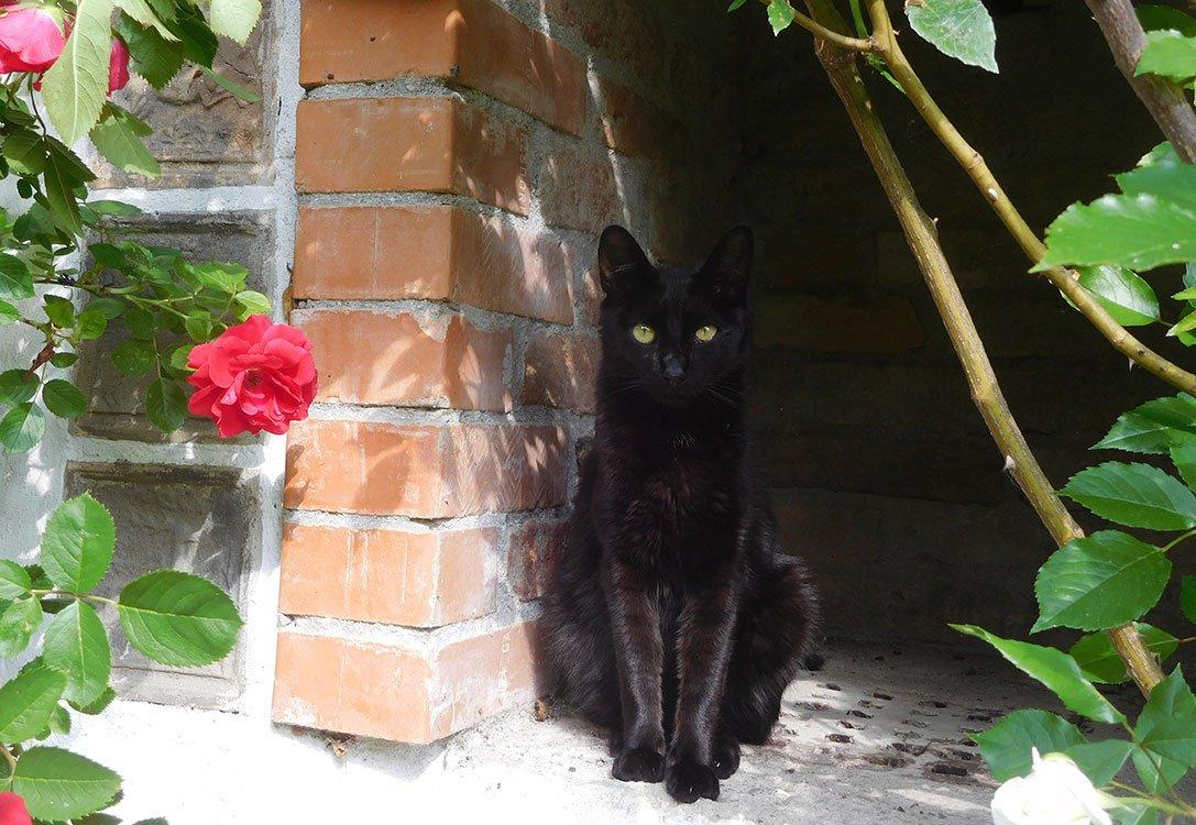 Katze Kiro - eine der Samtpfoten in unserer Pension