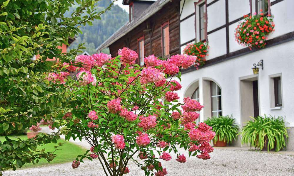 pilsachhof-arriach-kaernten (32)