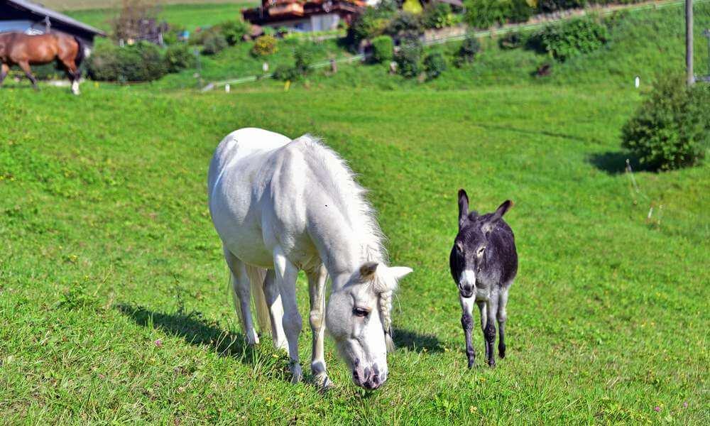 pilsachhof-arriach-kaernten (53)