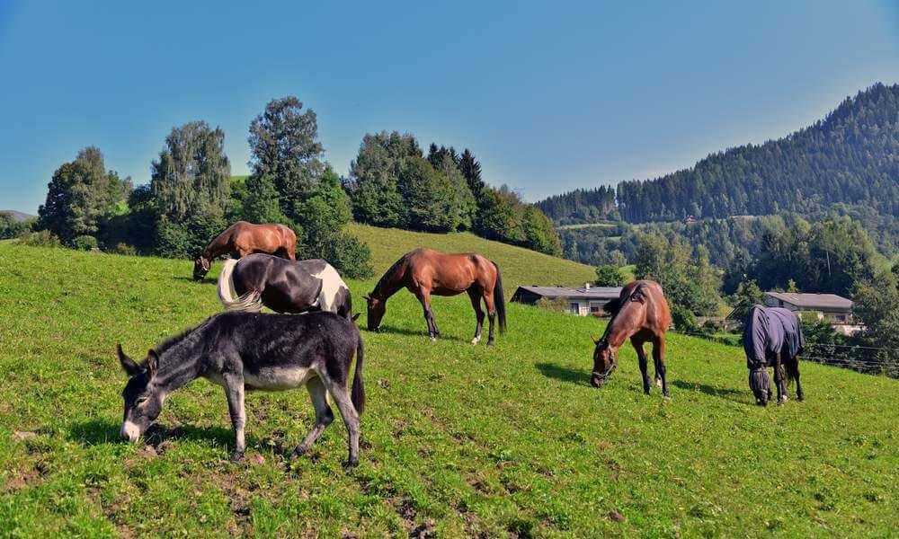 pilsachhof-arriach-kaernten (55)