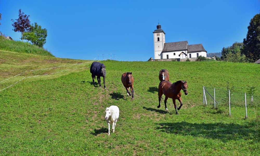 pilsachhof-arriach-kaernten (56)