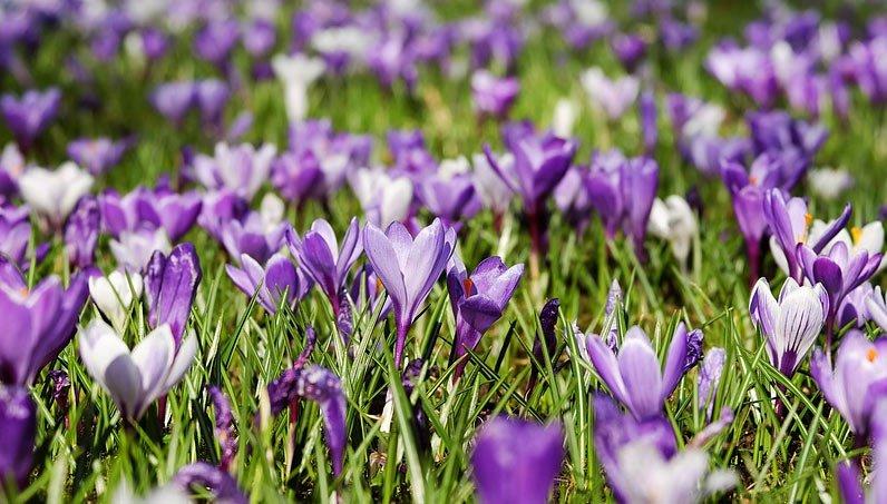 Frühlingsgefühle am Pilsachhof spüren und erleben