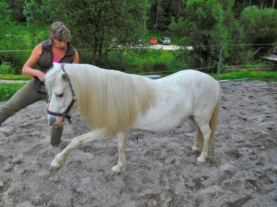 Urlaub mit Ponys am Bauernhof in Kärnten