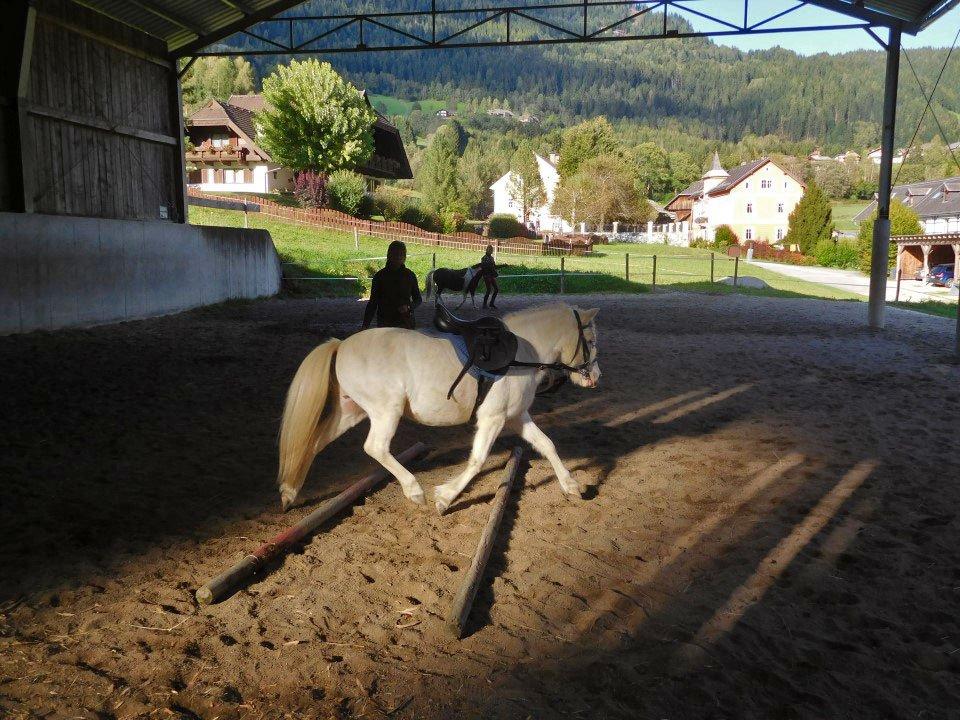 Urlaub am Bauernhof - unsere Ponys