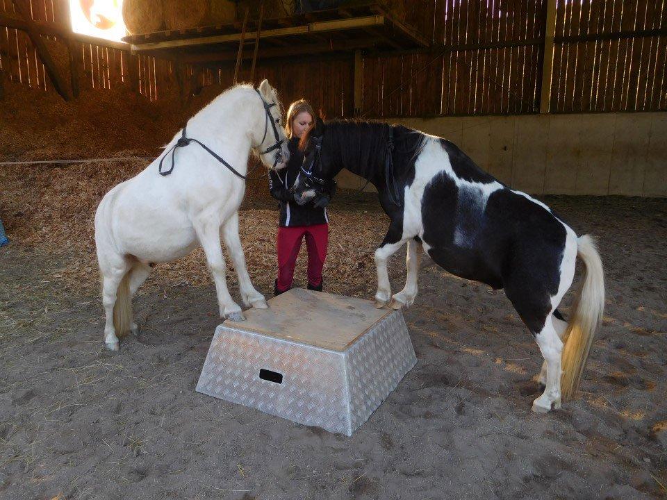 Bauernhofurlaub mit Ponys im Stall - Pilsachhof Nähe Ossiacher See in Kärnten