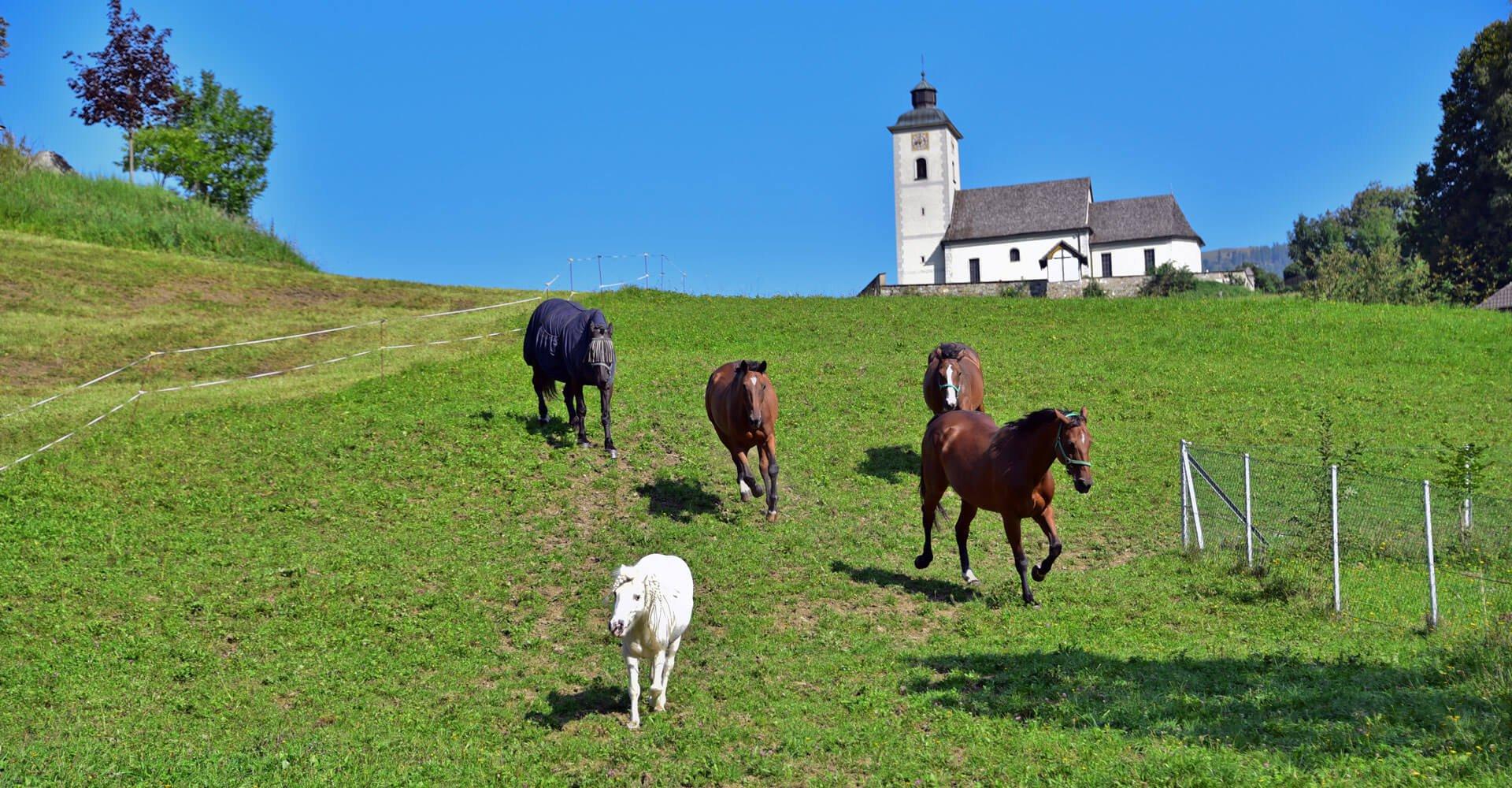 Pferde in Arriach - Reiturlaub in Kärnten am Pilsachhof