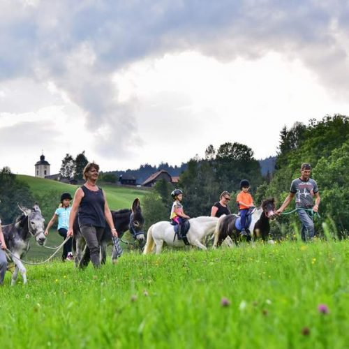 Reiturlaub in Kärnten - Pferde auf Wiese in Arriach