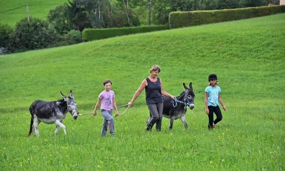 Kinder bei Wanderung mit Pony & Esel bei Reiturlaub in Kärnten am Pilsachhof