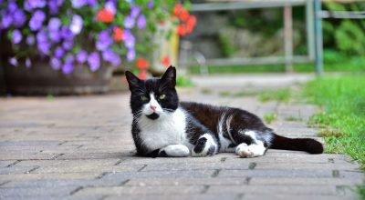 Urlaub am Bauernhof - unsere Katzen in Arriach Nähe Ossiacher See