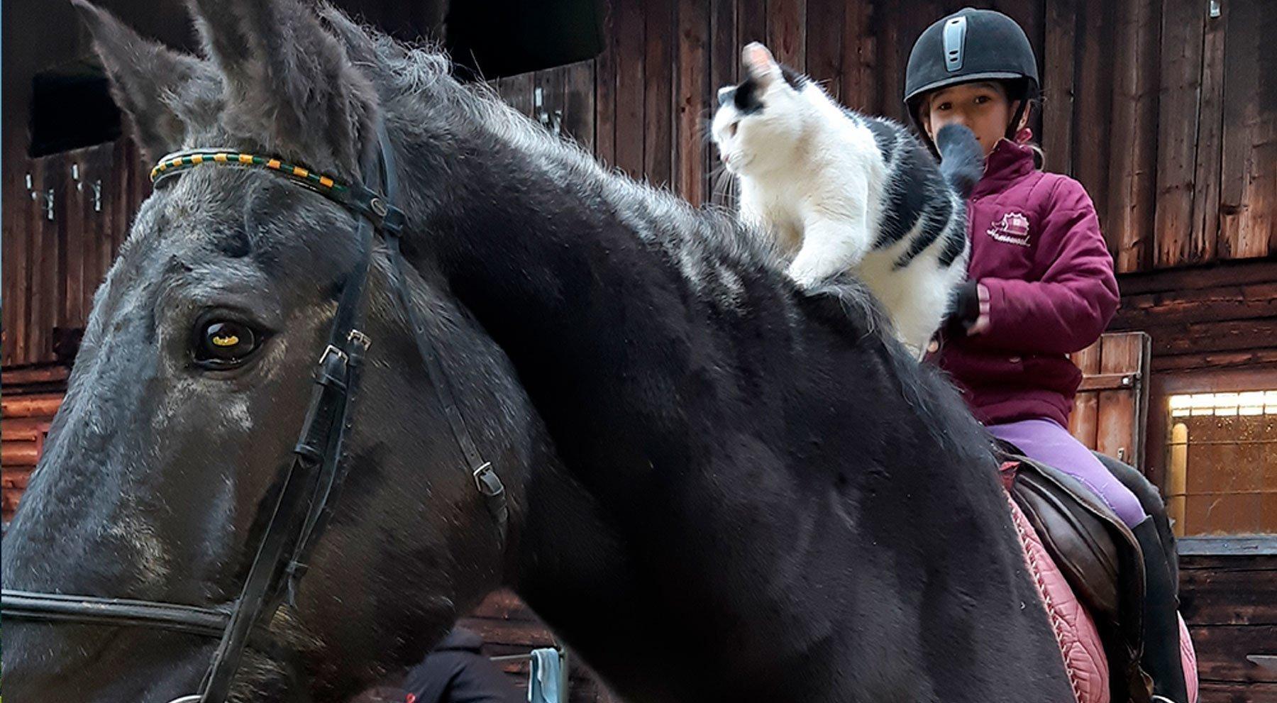Unser Pferd Furioso