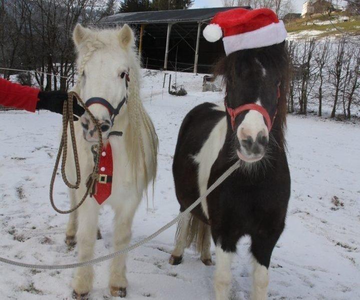 Ponys bei Winterurlaub in Hotel-Pension bei Gerlitzen Alpe in Arriach, Kärnten